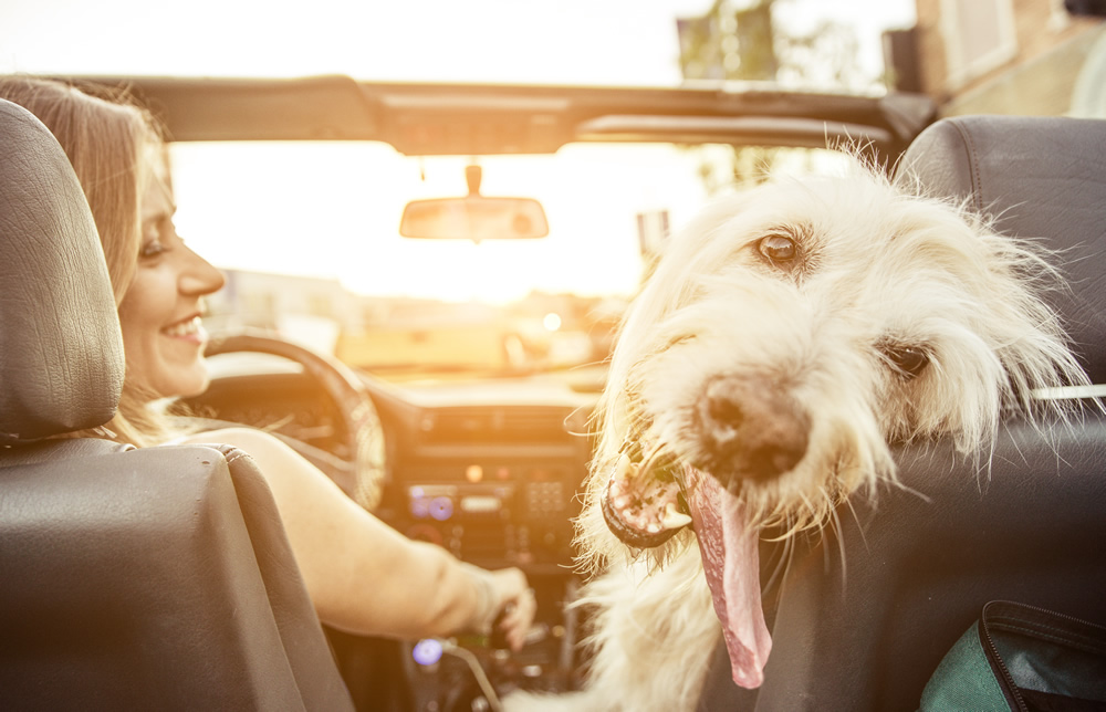 Driving with Pets in Cars