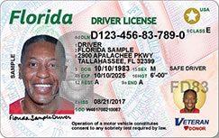 Florida Driver's License Design (Front)