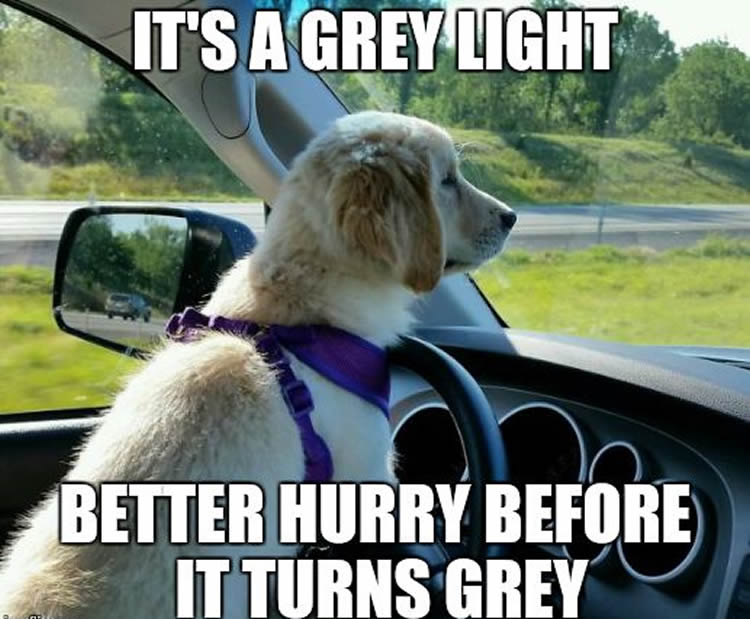 Funny Car Memes: These 16 Wholesome Memes Nail What It's Like To Drive